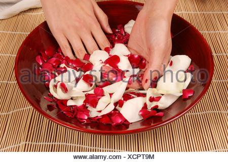 Une femme en plaçant ses mains dans un bol de pétales de rose Banque D'Images