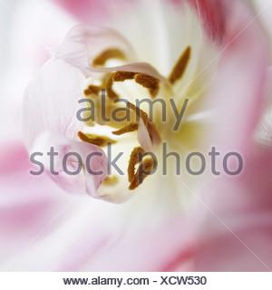 Close up of pollen sur fleur Banque D'Images