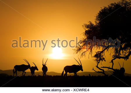 Sossusvlei, Parc National Namib Naukluft, Namibie Banque D'Images