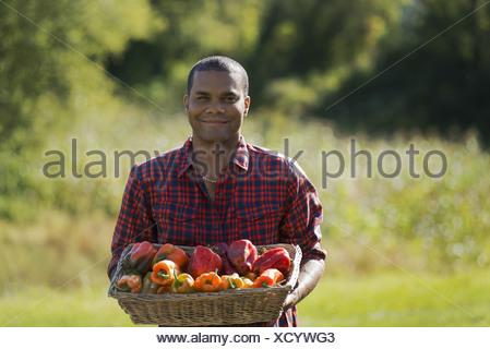 Woodstock, New York USA agriculteur avec bac de matières organiques récoltés poivrons Banque D'Images
