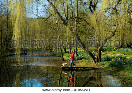 Une femme et chien sur une jetée sur un lac, sous un grand saule pleureur. Banque D'Images