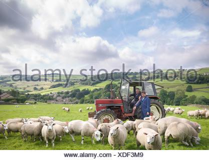 Agriculteur dans le tracteur avec son watching sheep in field Banque D'Images