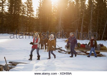 Amis marchant en traîneau tiré par des chevaux dans la neige Banque D'Images