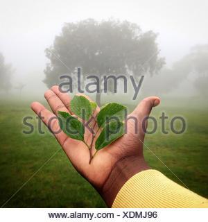 Human hand holding plant avec arbre en arrière-plan, le Gauteng, Johannesburg, Afrique du Sud