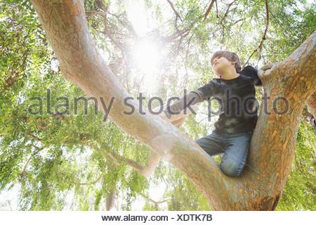 Boy hiding in sunlit tree yeux dans distance Banque D'Images
