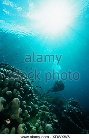 Raja Ampat, en Indonésie, l'océan Pacifique, plongée sous marine en eaux peu profondes avec des rayons de lumière à partir de la surface de diffusion en continu Banque D'Images