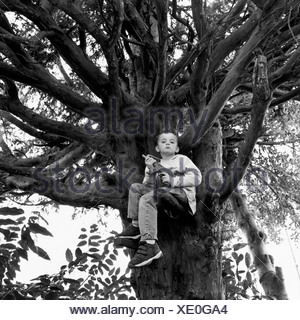Un garçon assis dans un arbre tenant une arme-jouet Banque D'Images