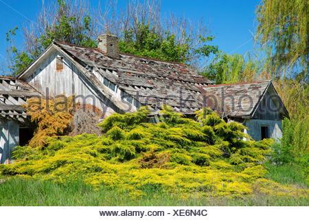 Homestead abandonné, Whitman County, Washington. Banque D'Images