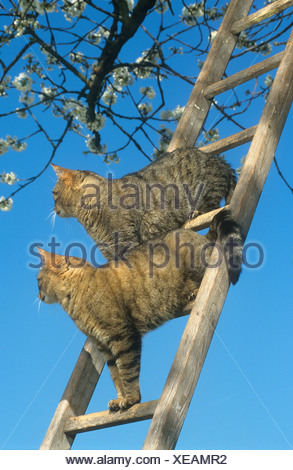 Deux chats domestiques - standing Banque D'Images