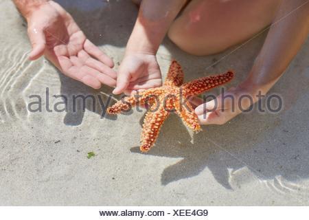 Parution du modèle. Enfant tenant des étoiles de mer sur la plage. Banque D'Images