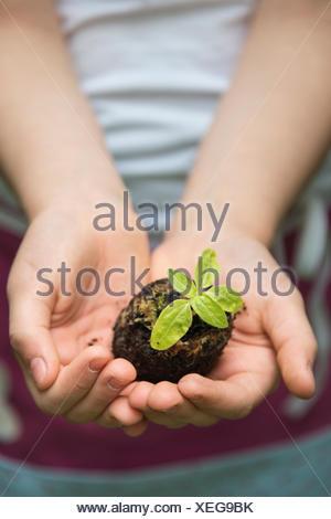 Petite fille, jardinage holding seedling in hands Banque D'Images