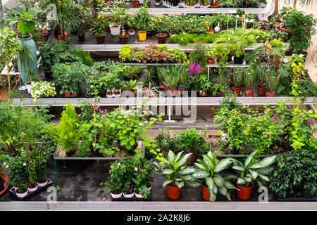 Una grande varietà di piante e fiori all'interno del botanic green house. Bella aranciera piena di motivi decorativi, rare piante esotiche e fiori per la vendita Foto Stock