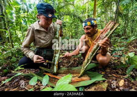 Ecuador, Tena, immersione esperienza di vita con la Waoranis del Rio Nushino, apprendimento della tecnica di fabbricazione di curari, da una corteccia di liana nella foresta