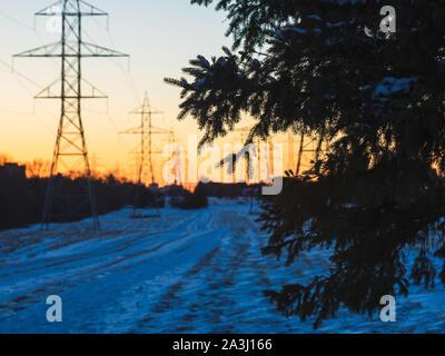 Ramo di albero di fronte powerlines durante il tramonto. Foto Stock