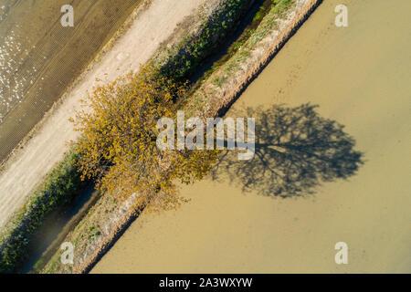 Vista aerea di albero e la sua ombra, sterrato e campi allagati per la coltivazione del riso. Visto da sopra. Foto Stock