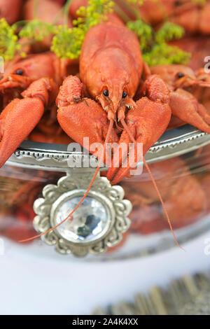 Gamberi bolliti / aragosta con aneto in recipiente di vetro - gourmet