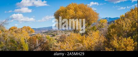 Altezza albero si trova al di sopra della foresta nella California del sud della Sierra Nevada.