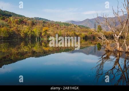 Paesaggio autunnale a giornata di sole. Asciugare gli alberi sporgenti da un tranquillo fiume azzurro con rami, riflettendo nel blu acqua e colori d'autunno foresta. Foto Stock