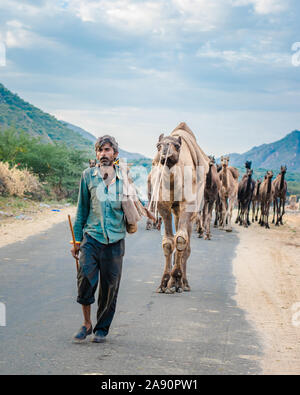 Commercianti di cammello che ritornano dalla foresta del deserto con la sua carovana alla fiera annuale del cammello a Pushkar, Rajasthan.