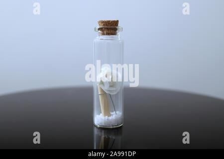 Il regalo di nozze della bottiglia chiusa con rosa bianca e un rotolo di pergamena. Il concetto di matrimonio Foto Stock