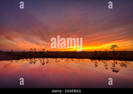 Orange twilight sky che riflette da un bog stagno Foto Stock