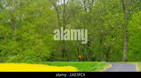 Touring ciclista femmina bicicletta equitazione da un campo di semi di colza (canola) e foresta lungo Eurovelo 7 percorso centrale Regione della Boemia Repubblica Ceca