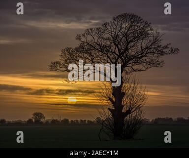 Lone Tree nel campo di sunrise Foto Stock