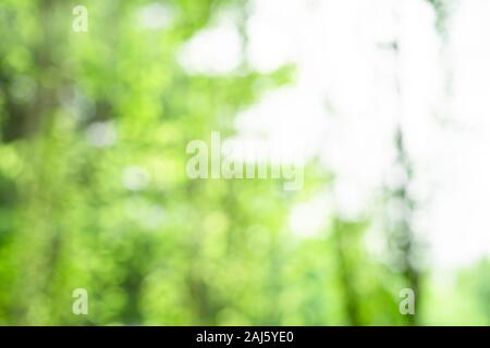 Sfondo di sfocatura fresco verde foglia di vite e nel giardino di mattina di lunedì per qualsiasi sullo sfondo della natura e del paesaggio. Foto Stock