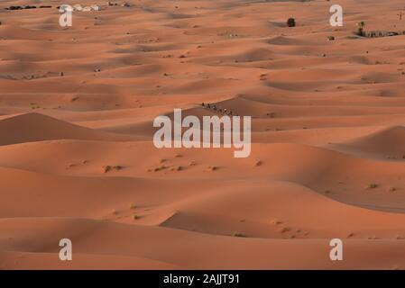Il mattino presto i turisti camminano su cammelli attraverso le dune di sabbia dorata del deserto del Sahara, Erg Chebbi, Merzouga, Marocco, Nord Africa. Foto Stock