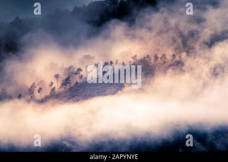 Alberi in nebbia Toscana Foto Stock