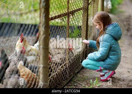 Ragazza carina piccola guardando polli fattoria attraverso recinzione di metallo. Bambini che esplorano la natura.