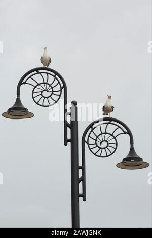 Due gabbiani seduti su lampioni con disegni ammoniti lungo il lungomare della città di Lyme Regis. La città si trova sulla Costa Giurassica e la a Foto Stock
