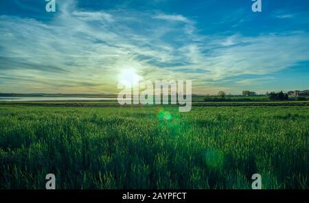 Bellissimo paesaggio, prato verde erba con sole primaverile e sfondo blu cielo in luce del tramonto con belle fiares sole raggi