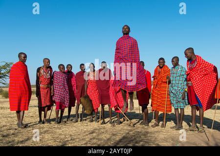 Giovani Maasai che eseguono una tradizionale danza jumping nel Masai Mara in Kenya. Foto Stock