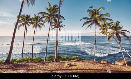 Spiaggia tropicale con palme da cocco all'alba, tonificante colore applicato.