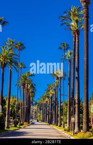 Una strada fiancheggiata da palme a Beverly Hills (Los Angeles), California USA.