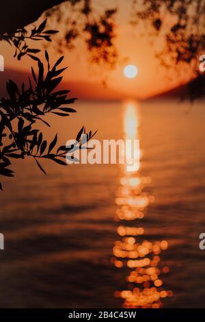 Silhouette ramo di olivo al mattino calda luce dell'alba. Forma del sole sul mare Mediterraneo. La riflessione del raggio del sole ha barrato i fasci sulla superficie ondulata dell'acqua nelle prime ore.