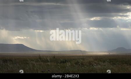 Un safari in piedi, tenda e jeep attraverso la Tanzania settentrionale alla fine della stagione delle piogge nel mese di maggio. Parchi Nazionali Serengeti, Ngorongoro Crater, Tarangire, Arusha E Lago Manyara. L'atmosfera luminosa del Serengeti