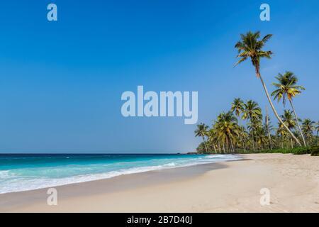 Esotica spiaggia tropicale con palme da cocco e oceano blu sotto il cielo blu in Goa, India