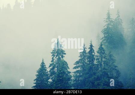 Misty foggy paesaggio di montagna con bosco di abeti in hipster vintage stile retrò Foto Stock