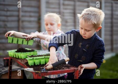 Due bambini della scuola elementare piantano semi in vassoi di semi di plastica verde Foto Stock