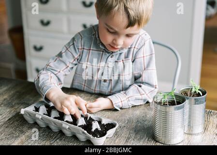Ragazzo di cinque anni che inizia jalapeño giovani pianta.