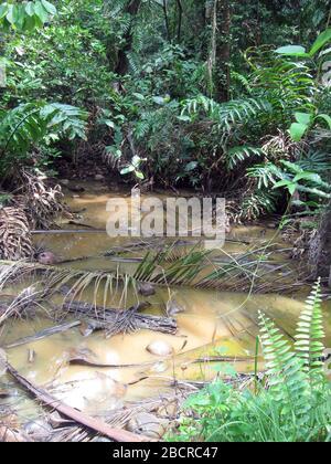 Stagno della foresta (Indonesia) Foto Stock