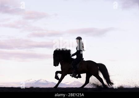 Cavallo islandese. Pilota in galoppo nero gelatinoso, con silhouette contro il cielo serale. Islanda Foto Stock