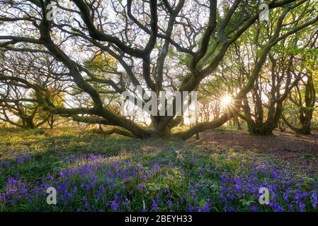 Piccolo bosco in primavera Foto Stock