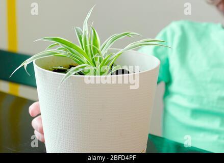 World Environment Day e Save World Concept, mani bambino ragazzo tenendo albero verde su pentola bianca Foto Stock
