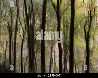 Foto di movimento astratto di sfocatura di alberi su Forest of Dean, Wye Valley, Inghilterra Galles