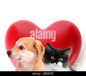 Gatto e cane con cuore rosso isolato su bianco