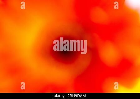 Un'astratta ripresa di fiori che mostrano colori vivaci e vivaci Foto Stock
