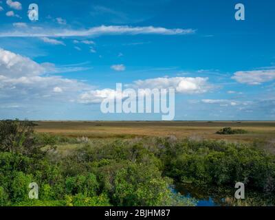 Everglades paesaggio che mostra uno stagno, ha visto erba, alberi, e un cielo blu brillante con le nuvole nel Parco Nazionale Everglades, Florida, Stati Uniti